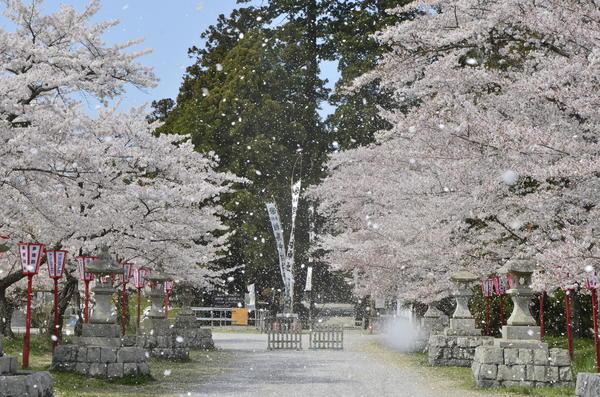 桜まつり.JPG