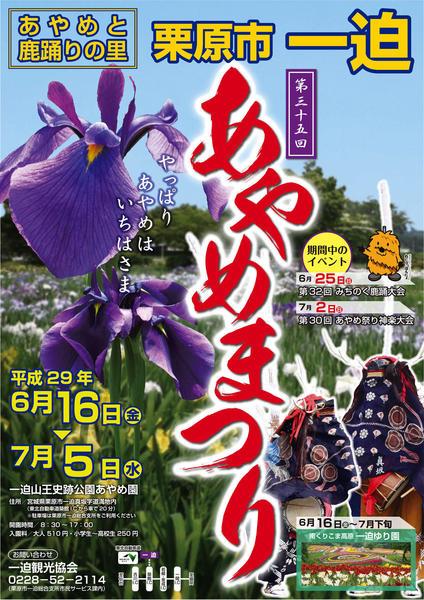 【H29】あやめまつり+ポスター.jpg